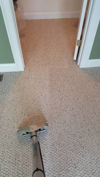 Carpet Cleaning in Norton, MA (1)