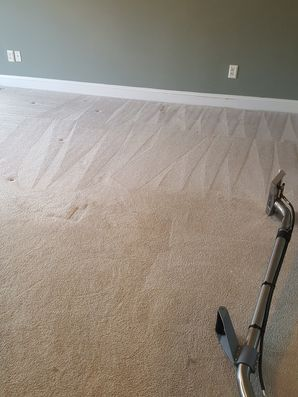 Carpet Cleaning in Norton, MA (2)